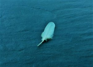 featherof angel